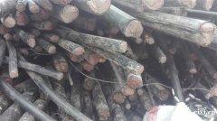 慈溪坎墩回收废旧电缆 海南村废电线电缆回收杭州湾回收电缆线